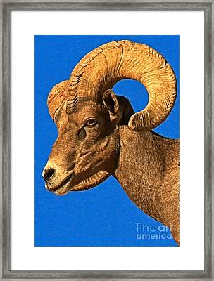 Head Of A Big Horn Framed Print