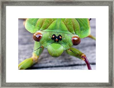 Head Of A Green Grocer Cicada Framed Print by Dr Jeremy Burgess