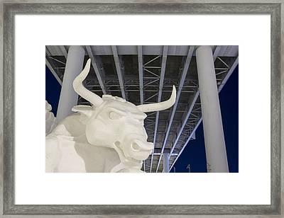 Head Of The Bull Framed Print by Tim Grams