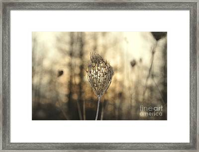 Head Of The Forest Framed Print