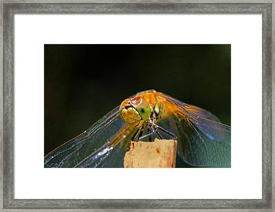 Head On Collision? Framed Print by Donna Kennedy
