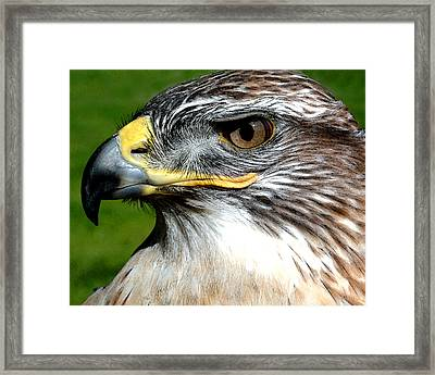 Head Portrait Of A Eagle Framed Print