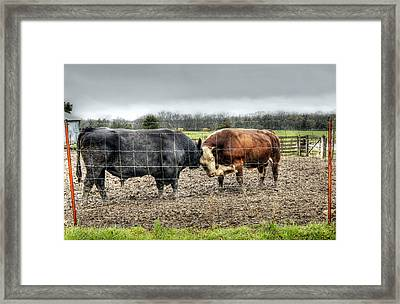 Head To Head Framed Print by Cricket Hackmann