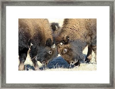 Head To Head Framed Print by Rick Rauzi