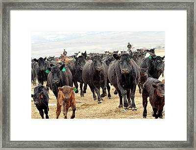 Headed For Branding Framed Print