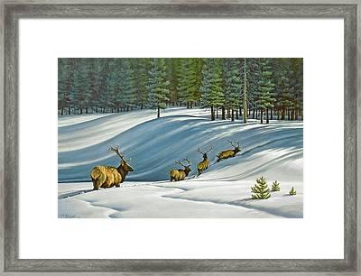 Heading For Timber - Elk Framed Print by Paul Krapf