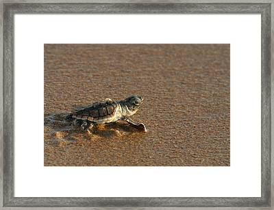 Heading Out To Sea Framed Print by Paul Rebmann
