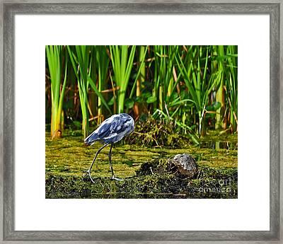 Headless Heron Framed Print by Al Powell Photography USA