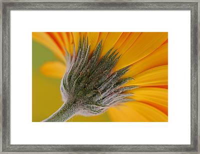 Heads Up Framed Print by Juergen Roth