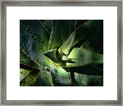 Healing Plant Framed Print by Camille Lopez