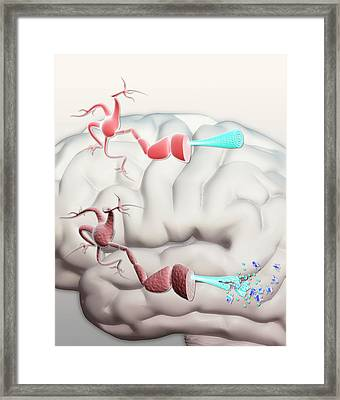 Healthy And Alzheimer's Neurons Framed Print