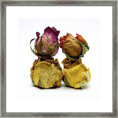 Heap Of Wilted Roses Framed Print by Bernard Jaubert