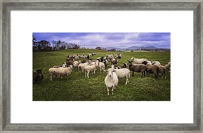 Framed Print featuring the photograph Hear My Voise by Jaki Miller
