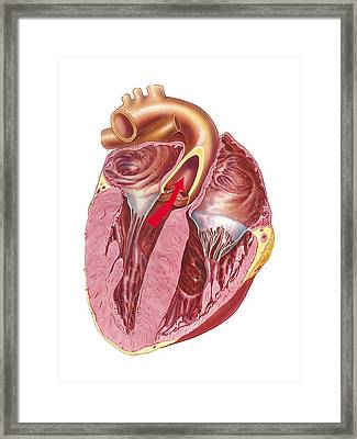 Heart Anatomy, Artwork Framed Print by Science Photo Library
