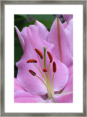 Heart And Soul Framed Print by Cindy McDaniel
