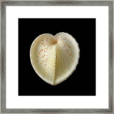 Heart Cockle Shell Framed Print