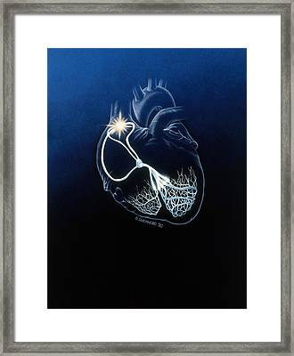 Heart Conduction System Framed Print by Bob L. Shepherd