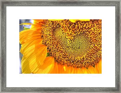 Heart-felt Sunflower Framed Print