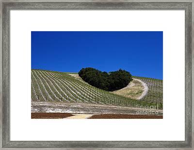 Heart Hill Paso Robles Framed Print by Jason O Watson