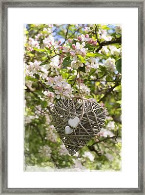 Heart In Blossom Framed Print