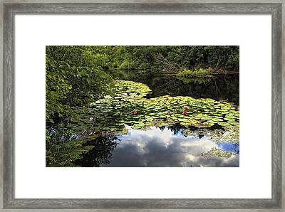 Heart Lillies Framed Print by Vessela Banzourkova