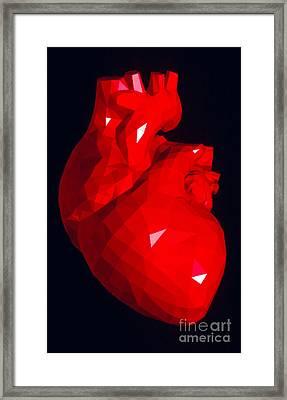Heart Model Framed Print by Scott Camazine