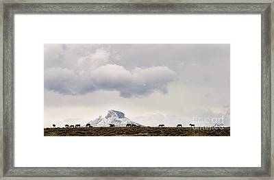 Heart Mountain Horses Framed Print