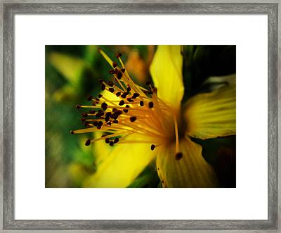 Framed Print featuring the photograph Heart Of A Flower by Zinvolle Art