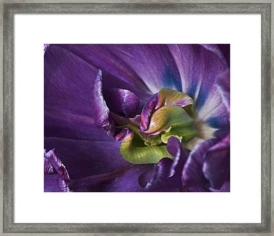 Heart Of A Purple Tulip Framed Print by Rona Black
