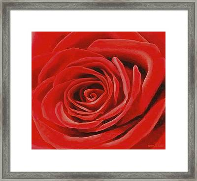 Heart Of A Red Rose Framed Print by Sophia Schmierer