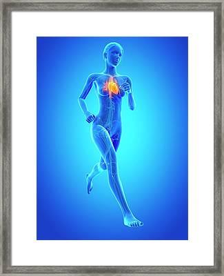 Heart Of A Runner Framed Print by Sebastian Kaulitzki