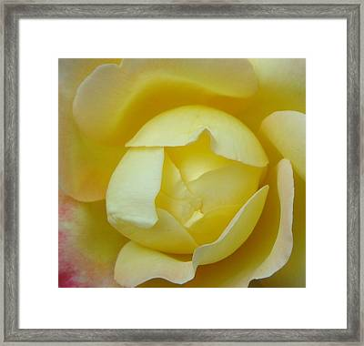 Heart Of A Yellow Rose Framed Print by Brian Jones
