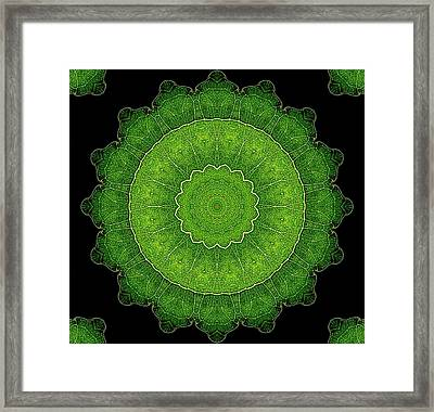 Heart Of Poplar Framed Print