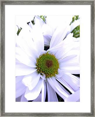 Heart Of The Daisy Framed Print