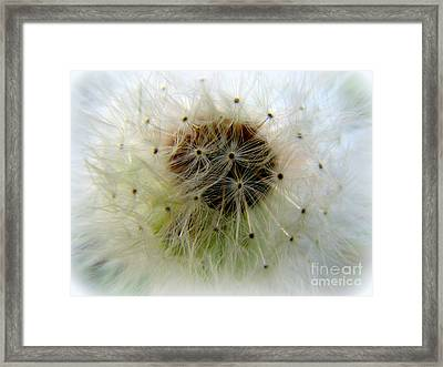 Heart Of The Dandilion Framed Print