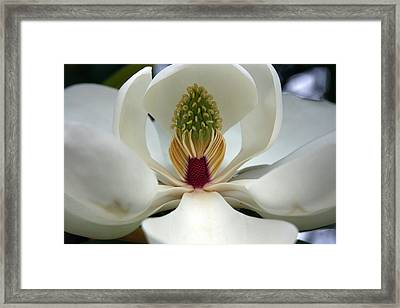 Framed Print featuring the photograph Heart Of The Magnolia by Andy Lawless