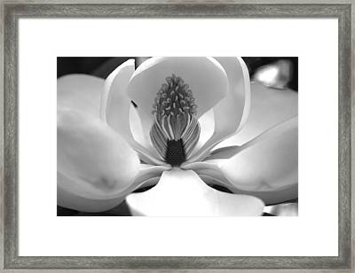 Heart Of The Magnolia Black And White Framed Print