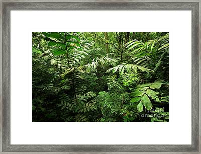 Heart Of The Rain Forest - Costa Rica Framed Print