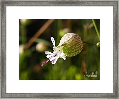 Framed Print featuring the photograph Heart On Tongue by Agnieszka Ledwon