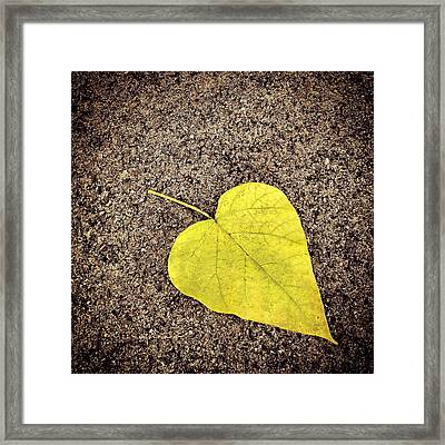 Heart Shaped Leaf On Pavement Framed Print