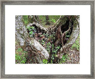 Framed Print featuring the photograph Heart-shaped Tree by Jan Dappen