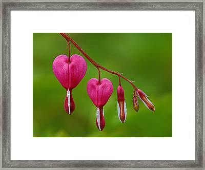 Heart String Framed Print