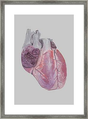 Heart Framed Print by Terence Leano
