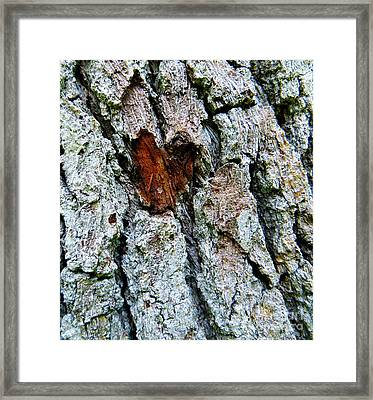 Heart Wood Framed Print by Joy Hardee