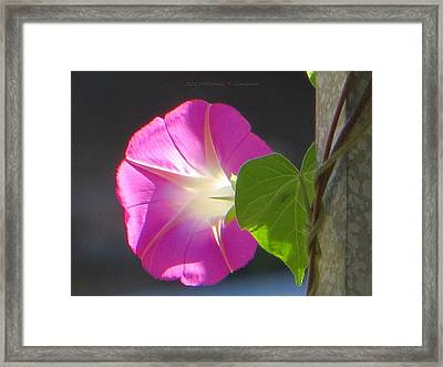 Heartening Green Framed Print