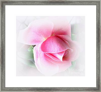 Heartfelt Pink Rose Framed Print