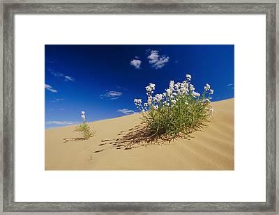 Hearty Wild Stock Wildflowers Growing Framed Print by Jason Edwards
