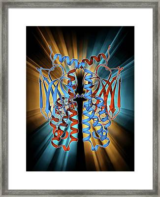 Heat Shock Protein 70 Framed Print
