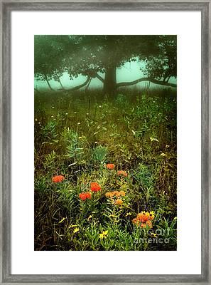 Heaven In The Gloom I - Blue Ridge Parkway Framed Print by Dan Carmichael
