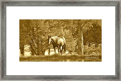 Framed Print featuring the photograph Heaven On Earth by Barbara Dudley